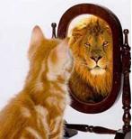 chat Le rêve : Un acteur de l'évolution ?